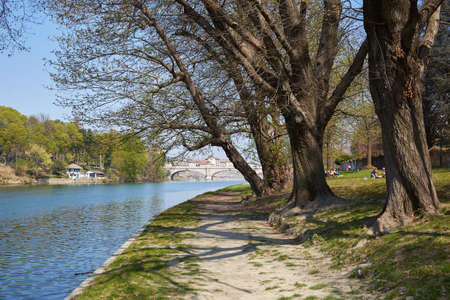 Po river bank path with old trees and people in a sunny day, blue sky in Piedmont, Turin, Italy