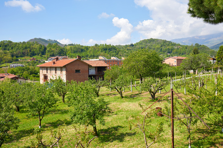 Orchard and red bricks rural house in a sunny summer day, Italy