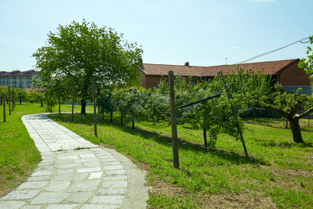 Stone tiled path, orchard and rural house in a sunny summer day, Italy Imagens