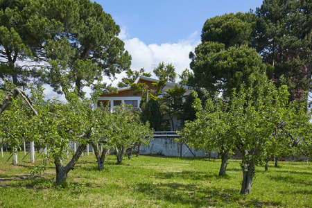 Villa, garden and orchard in a sunny summer day, Italy Imagens