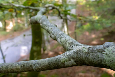 tree branch close up in the woods