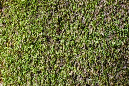 Ground covered with green moss close up.