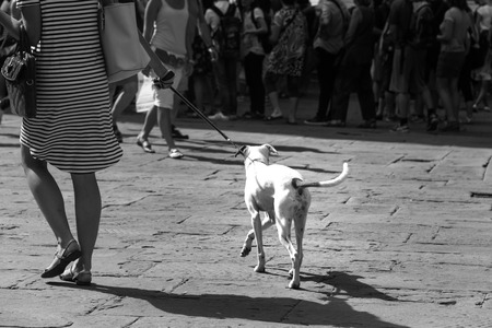 dog Stock Photo - 41035700