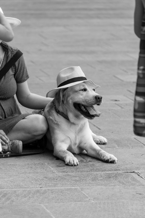 tradional: Dog looking away with old tradional hat on her head