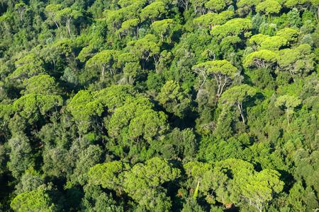 Wald Blick von oben. Standard-Bild - 36522517