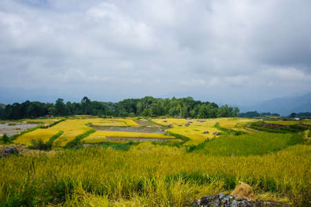 toraja: Rice plantations in the hills of Sulawesi9