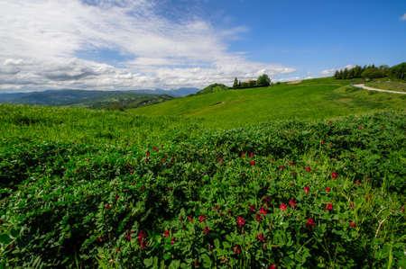 minor: alfalfa grass on the path of the Flaminia Minor hills of Bologna Stock Photo