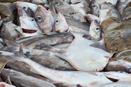 seized: Fresh caught fish lying together for sale  Stock Photo