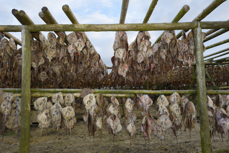 seized: Fish drying on wooden construction