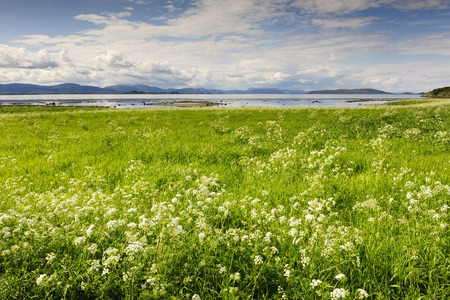 serenety: Norwegian fjord with snow on hte mountains and flowers in foreground
