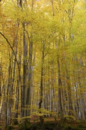 Forest and leaves in autumnal colors.