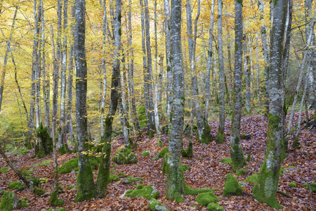 prototypical: Forest and leaves in autumnal colors.