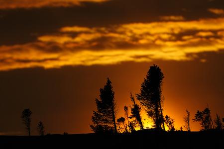 Arctic sunset on the taiga at Wapusk national park, Canada.