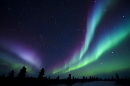 Nightsky lit up with aurora borealis, northern lights, wapusk national park, Manitoba, Canada. 版權商用圖片 - 71224857