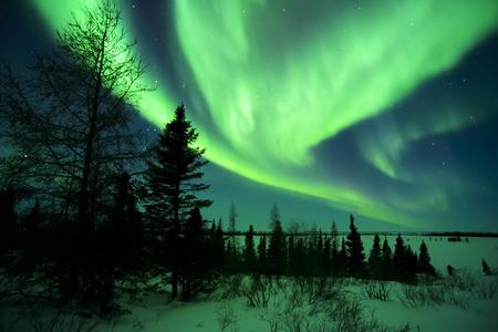 evergreen tree: Nightsky lit up with aurora borealis, northern lights, wapusk national park, Manitoba, Canada.