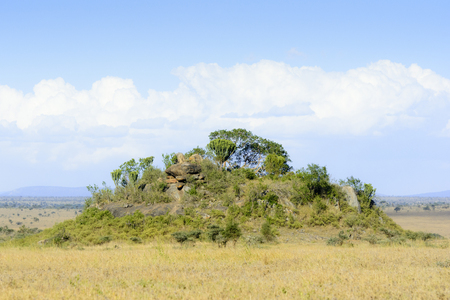 Landscape with a koppie in the southern plains, Serengeti national park, Tanzania.