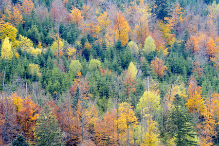 Forest on a mountain slope with fall colors during autumn in the French Alps.