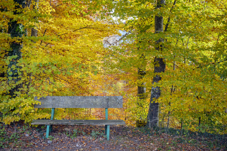 Little bench for hikers in a forest with autumn colors, Haute Savoie, France
