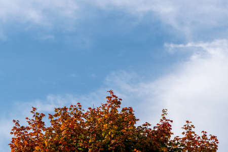 Abstract autumn landscape. Red and yellow leaves of trees against the sky. Space for lettering and design