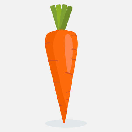 Vector illustration of fresh carrot, Organic nutrition healthy food on white background