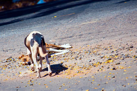 dead dog: Dog looking at another dog laying dead on a road