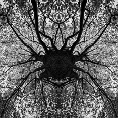 photo manipulation: Photo manipulation - tree black and white mandala