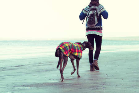 Unrecognisable hipster girl walking her dog, Greyhound, on the beach. Colorised filter effect image.