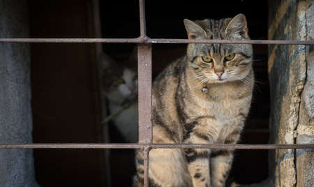 Scraed cats behind bars photo