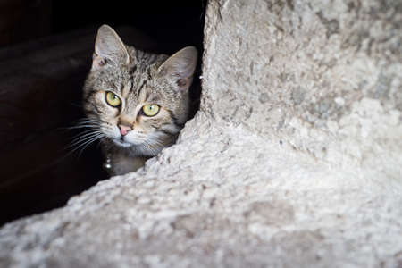 behind bars: Scraed cats behind bars Stock Photo