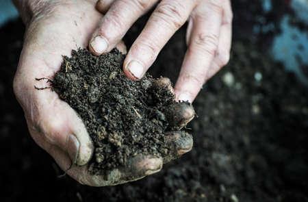 manos sucias: La mujer mayor Manos que sostienen la tierra fresca. S�mbolo de la primavera y el concepto de la ecolog�a