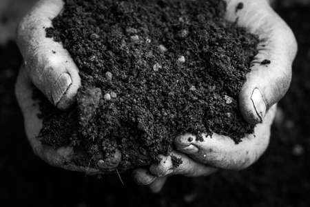 earth handful: Old woman hands holding fresh soil. Symbol of spring and ecology concept