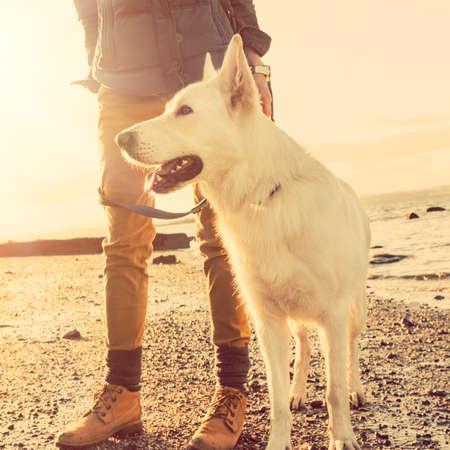 Hipster girl playing with dog at a beach during sunset, strong lens flare effect