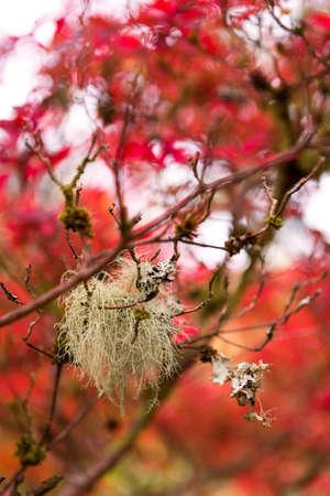 mood moody: Autumn botany background