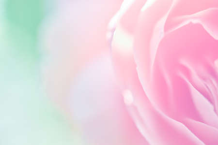 abstract love: sweet color rose in soft color and blur style for background