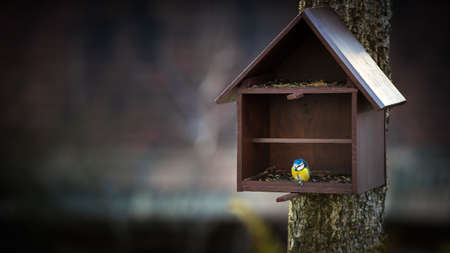 cyanistes: Bird feeder and Blue Tit (Cyanistes caeruleus) Stock Photo