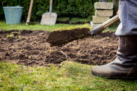 grassplot: Man using spade for old lawn digging