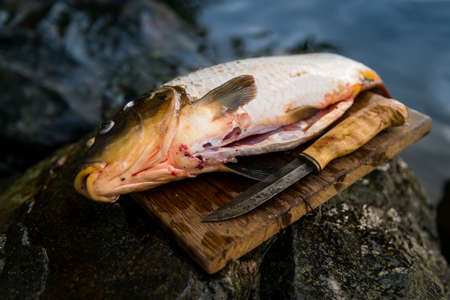 Freshly caught carp on cutting board with knife Stock Photo