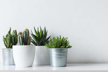 Sammlung von verschiedenen Kakteen und Sukkulenten in verschiedenen Töpfen. Eingemachte KaktusZimmerpflanzen auf weißem Regal gegen weiße Wand. Standard-Bild