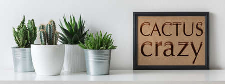 Modern room decoration. Various cactus and succulent plants in different pots. Mock-up with a black frame. Cactus crazy concept.