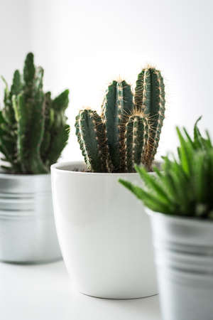 Various cactus and succulent plants in different pots close up. Modern room decoration. Cactus house plants collection. 版權商用圖片 - 95073220