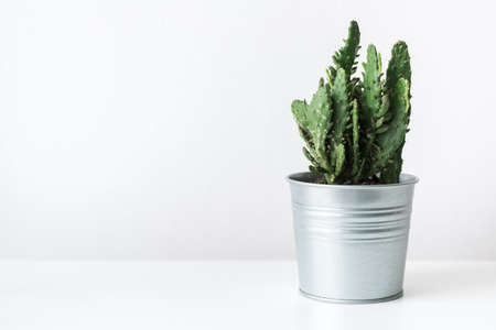 Cactus plant in a metal pot as modern room decoration.