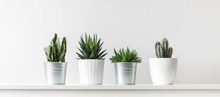 Sammlung von verschiedenen Kaktus und Sukkulenten in verschiedenen Töpfen Standard-Bild - 96240118