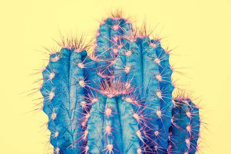 Cactus plant close up. Trendy pastel coloured fashion exotic pop minimal background with cactus plant.