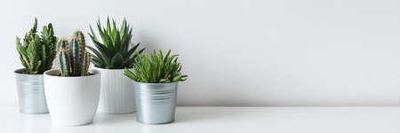 Colección de varios cactus y plantas suculentas en diferentes macetas. Plantas de la casa de cactus en maceta en el estante blanco contra la pared blanca. Foto de archivo