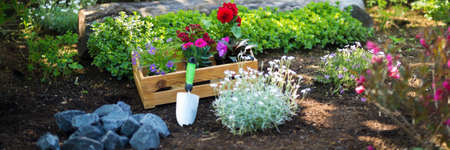 Gardening. Crate Full of Gorgeous Plants and Garden Tools Ready for Planting In Sunny Garden. Spring Garden Works Concept. Garden Landscaping small business start up. Web banner.
