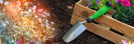Gardening. Crate Full of Gorgeous Plants Ready for Planting In Garden. Spring Garden Works Concept. Garden Landscaping small business banner.