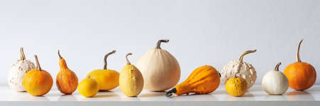 Happy Thanksgiving Background. Selection of various pumpkins on white shelf against white wall. Modern seasonal room decoration. Pumpkins banner. Minimalism autumn concept. Banque d'images - 107735588