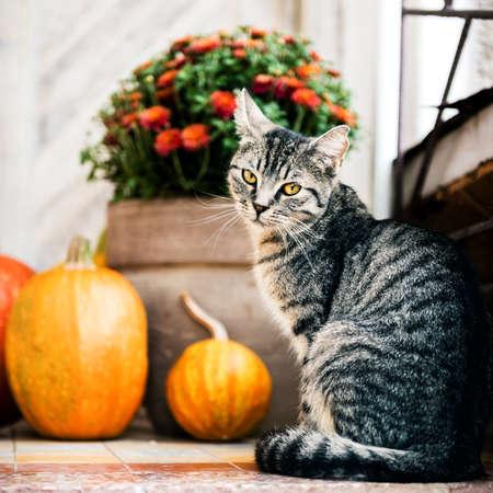 Halloween dekorierte Haustür mit verschiedenen Kürbisgrößen und -formen. Eine Katze sitzt auf der Veranda.