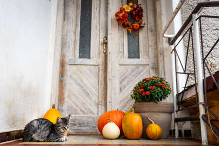 Halloween decorated front door with various size and shape pumpkins. Cat on Front Porch decorated for the Halloween, Thanksgiving, Autumn season background.