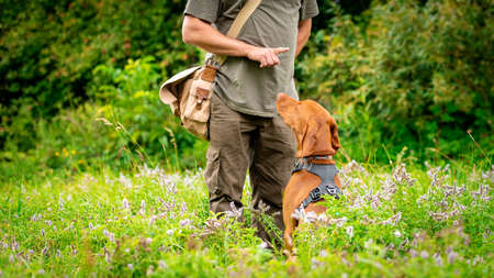 Beautiful Hungarian Vizsla puppy and its owner during obedience training outdoors. Sit and stay command.